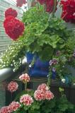 Mostly geranium @f5.6 A12