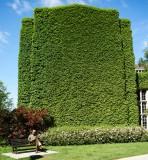 Grass building @f4 ~28mm D800E