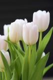 Tulips @f5.6 D800E
