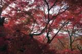 Fall colour 2014/Nov