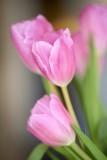 Tulips @f2.5 D800E
