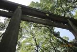 Torii of Meiji Shrine