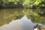 the pond of inner garden