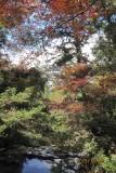 Fall in Miyajima