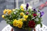 Flower pot @f4 a7