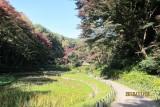 Fall in Meiji shrine 2