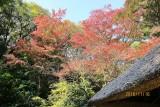 Fall in Meiji shrine 3