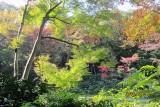 Fall in Meiji shrine 4