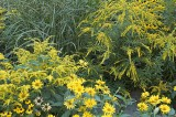 Autumn Yellow @f5.6 D70