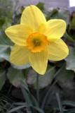 Daffodil @f11 & 0.2m 5D