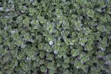 Greens @f11 & 0.25m 5D