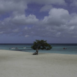 Divi Tree, Eagle Beach