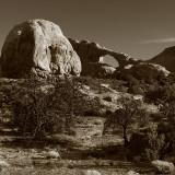 Desert's Lonely Beauty