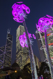 Christmas Lights in Central Statute Square, Hong Kong