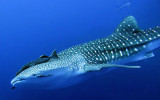 Diving Expedition to the Similan Islands