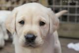Hallo puppy (puppy 6)