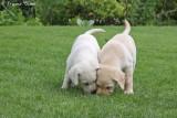 Puppy 5 en 6