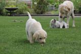 Mama Hanne met 2 pups
