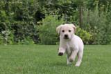 Puppy 8