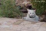 Kat met blauw en groen oog