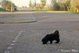 Puppy ontdekt de wereld
