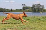 Workshop hondenfotografie