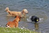 Ook leuk om in het water spelende honden te fotograferen