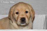 Puppy 7 portret