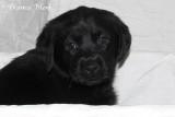 Puppy 4 portret