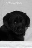 Puppy 3 portret