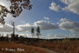 In de bossen en heide rond Woudenberg