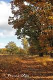 In de bossen bij Woudenberg