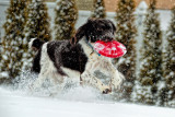 Dogs in Snow, Dec 18, 2004, and a few from 2013 and 2014