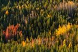 Photosafari in Lapland