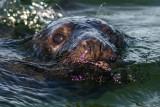 Seal safari in the Baltic Sea