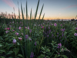 August 2013 : Dawn in salt marsh