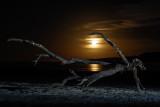 Moon swimming_DSC8862.jpg