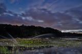 Cranberry bog and moon_DSC9838.jpg
