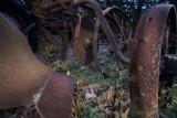 Plough_DSC1731 1350.jpg