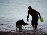 Dog + Water + Frisbie = FUN!