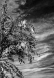 Rosemoor in Black and White.