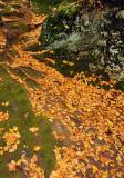 Leaf Cascade_1585.jpg