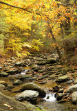 Autumn Stream_2906.jpg