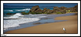 Seagull Peaceful Beach.