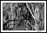 Swamp Board Walk