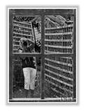 Strange Photographer In Garden Mirror