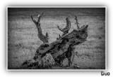 Leathery Old Tree Stump.