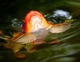 Flying on Water Wings