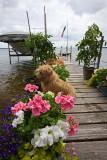 Dock Life/Murphy