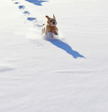 A Romp in the Snow